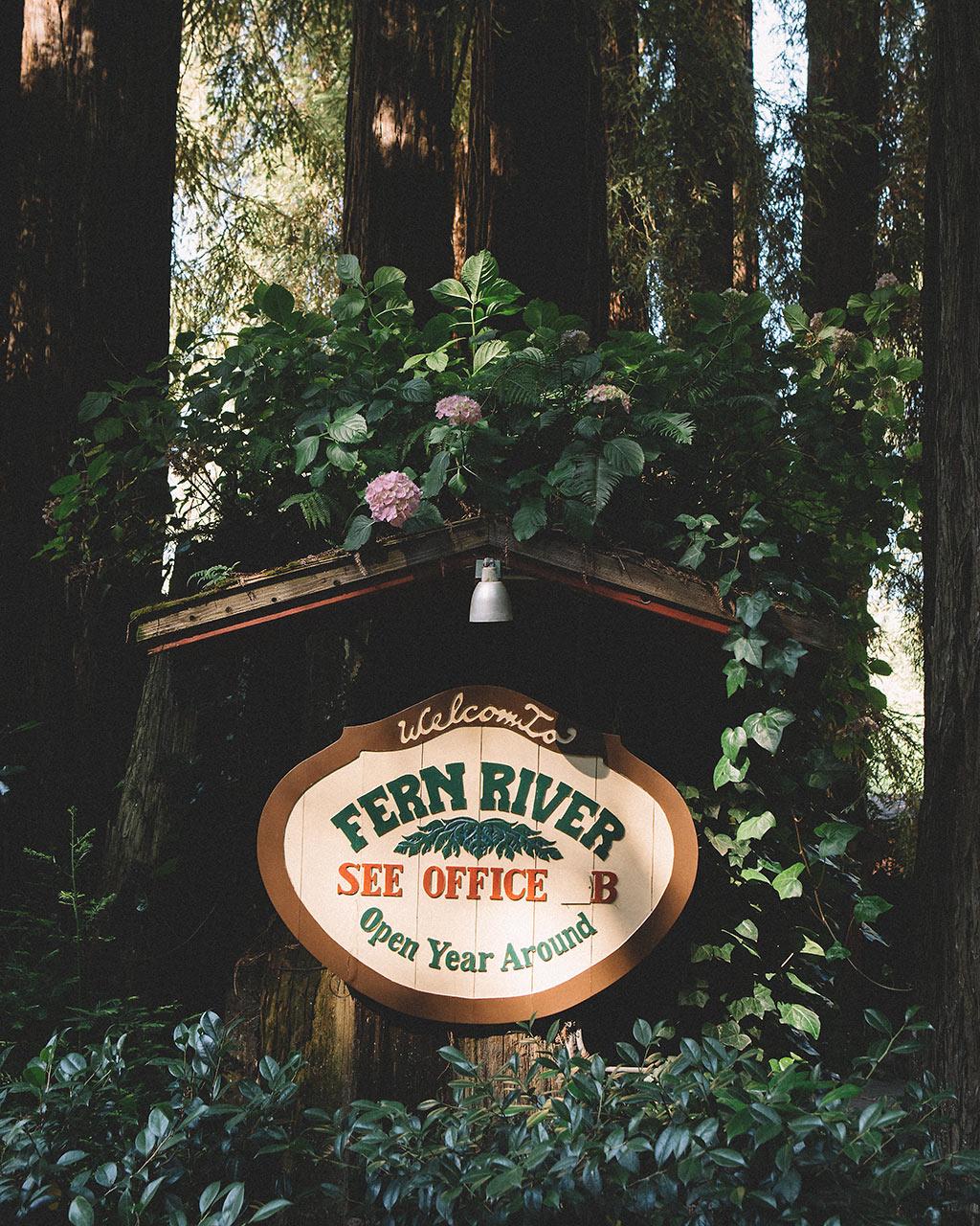 fern river boda en un bosque de sequoias california